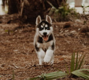 dog running towards you
